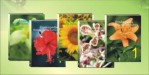 Ensiklopedia Biologi Dunia Tumbuhan (EBDT)